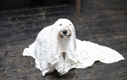 Dog dressed up as a ghost